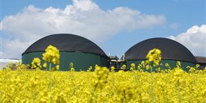 Bild: Biomasse