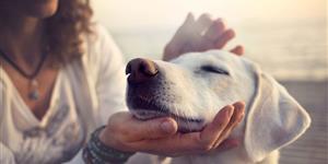 Bild: Frau streichelt Hund