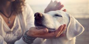 Bild: Frau streichelt Hund in Nahaufnahme