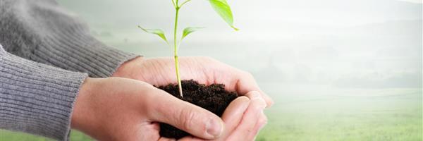 Bild: Hand hält Pflanze