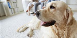 Hundehaftpflicht-Vergleich
